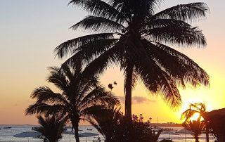 Palmen bei Sonnenuntergang Kap Verde