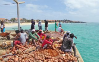 Fischersteg von Santa Maria auf der Insel Sal